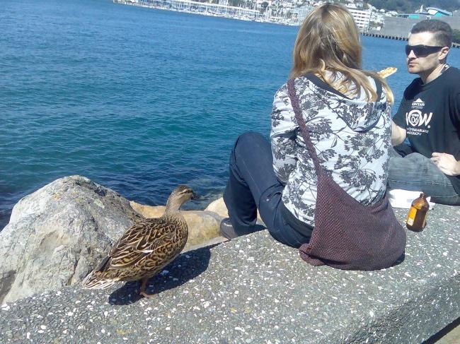 duck-thief.jpg