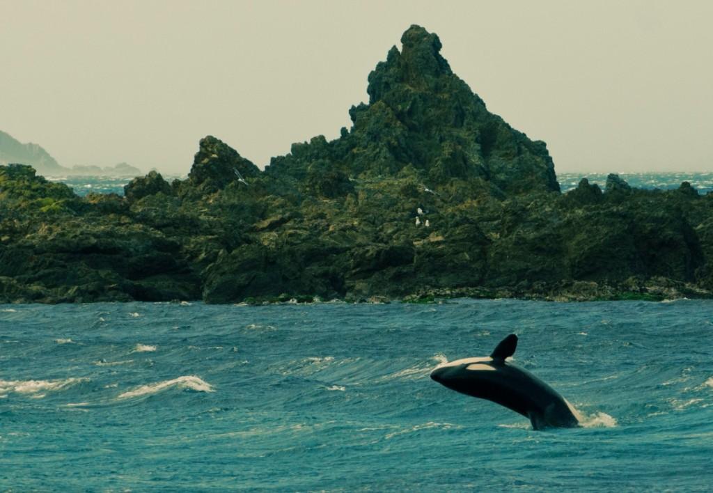 grant-maiden-orca-small