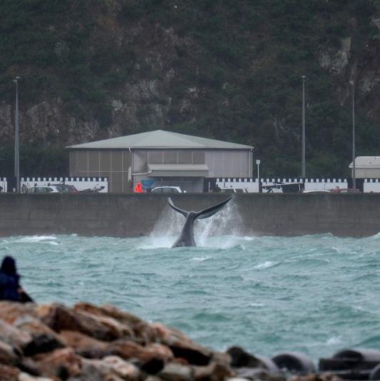 whale von lampard